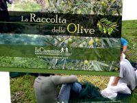 incammino_olive